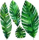 Vector watercolor green leaves Stock Photos