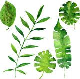Vector watercolor green leaves Royalty Free Stock Image