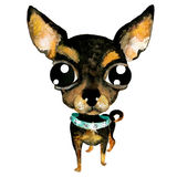 Vector watercolor hand drawn cute chihuahua dog. Stock Image