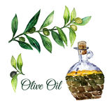 Vector watercolor hand drawn olive branches with glass bottle isolated on white background. Stock Photos