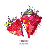 Vector watercolor hand drawn red strawberries, isolated on white background. royalty free illustration