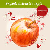 Vector watercolor hand drawn ripe red apple with watercolor drops Stock Images