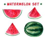 Vector watercolor hand drawn watermelon set. royalty free illustration