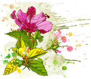 Vector watercolor Hibiscus Stock Photos