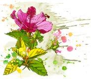 Vector watercolor Hibiscus Stock Photos
