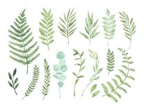 Vector watercolor illustrations. Botanical clipart. Set of Green. Leaves, herbs and branches. Floral Design elements. Perfect for wedding invitations, greeting vector illustration
