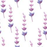 Vector watercolor lavender delicate bunch Stock Image