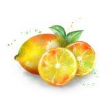 Vector watercolor lemon Stock Photo