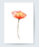 Vector watercolor painting poppy flower. Red poppy flower background for greeting card Royalty Free Stock Photos