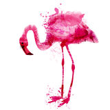 Vector watercolor pink flamingo in splashes Stock Photos