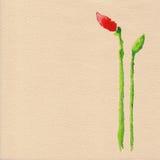 Vector watercolor poppy flower Stock Photo