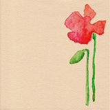 Vector watercolor poppy flower Royalty Free Stock Photos