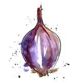 Vector watercolor purple onion bulb Royalty Free Stock Photo