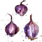 Vector watercolor purple onions Royalty Free Stock Photos