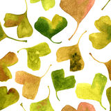 Vector watercolor seamless pattern with green leaves of ginkgo Stock Image