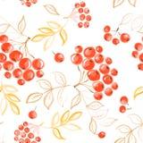 Vector watercolor seamless rowan pattern. Royalty Free Stock Photos