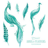 Vector watercolor set of birds and feathers Royalty Free Stock Photos