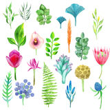 Vector watercolor set of flowers, leaves and plants Royalty Free Stock Photo