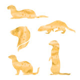 Vector watercolor silhouettes of a ferret. Ferret vector watercolor icons and patterns. Set of illustrations in different poses Royalty Free Stock Image