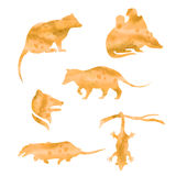 Vector watercolor silhouettes of a opossum Stock Photos