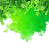 Vector watercolor spot with green leaves Royalty Free Stock Image