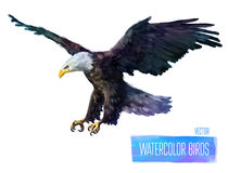 Vector watercolor style  illustration of bird Royalty Free Stock Photo