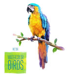 Vector watercolor style  illustration of bird Stock Images