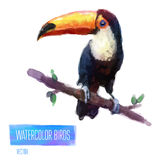 Vector watercolor style  illustration of bird Stock Photo