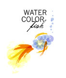 Vector watercolor transparent gold fish Royalty Free Stock Images