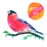Vector watercolor wildlife natural winter Royalty Free Stock Photos