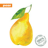 Vector watercolor yellow pear Royalty Free Stock Image