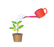 Vector of watering the money tree Stock Photos
