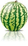 Vector watermeloenfruit Stock Afbeelding