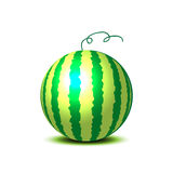 Vector watermelon Royalty Free Stock Photography