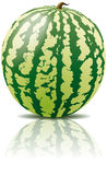 Vector watermelon fruit Stock Image