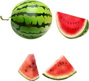 A vector of watermelon fruit. royalty free illustration