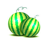 Vector watermelons Royalty Free Stock Photos