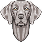 Vector Weimaraner Royalty Free Stock Photography