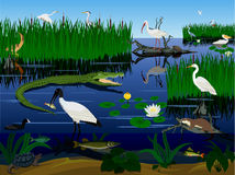 Vector wetland Florida Everglades landscape with animals Royalty Free Stock Photos
