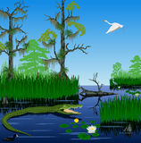 Vector wetland Pantanal Everglades landscape Royalty Free Stock Photography