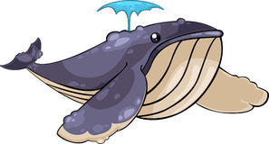 vector Whale Illustration Royalty Free Stock Photos