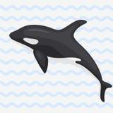 Vector whale illustration marine mammal north surface deep humpback ocean marine mammal. Royalty Free Stock Photo