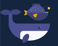Vector whales illustration of marine mammal. Stock Images