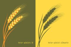 Vector wheat in 3d and silhouette on green and yellow background isolated. Vector. Vector wheat in 3d and silhouette on green and yellow background isolated Stock Image