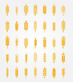 Vector wheat ears icons set Stock Images