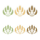 Vector Wheat ears isolated illustration on white Royalty Free Stock Images