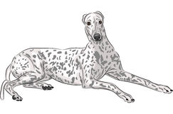 Free Vector Whippet Stock Photo - 45754520