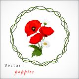 Vector white background with chamomile and poppies Royalty Free Stock Images