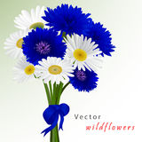 Vector white background with flowers camomile Stock Image