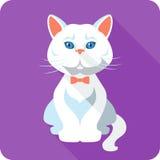 Vector white british Cat icon flat design Stock Photos